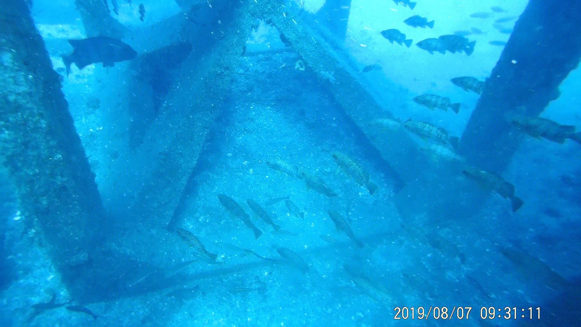 0811  第26回、人工魚礁研究会_b0075059_15244862.jpg