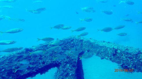 0811  第26回、人工魚礁研究会_b0075059_15261560.jpg