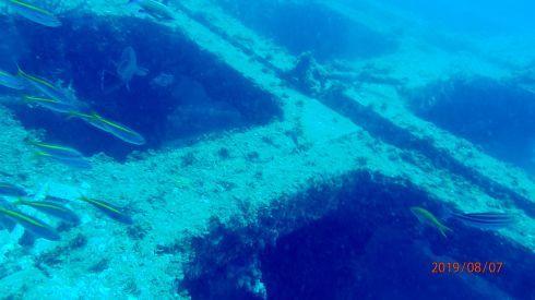 0811  第26回、人工魚礁研究会_b0075059_15315422.jpg