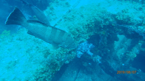 0811  第26回、人工魚礁研究会_b0075059_15324101.jpg