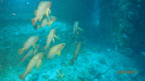 0811  第26回、人工魚礁研究会_b0075059_15335045.jpg
