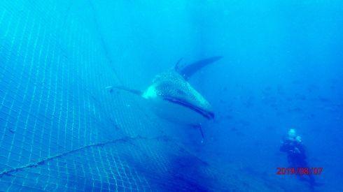 0811  第26回、人工魚礁研究会_b0075059_15421223.jpg
