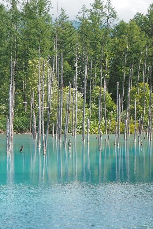 青い池_a0292060_16154968.jpg
