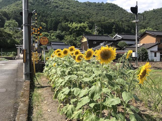 夏の思い出「竹田城跡」(1)_f0134963_19385012.jpg