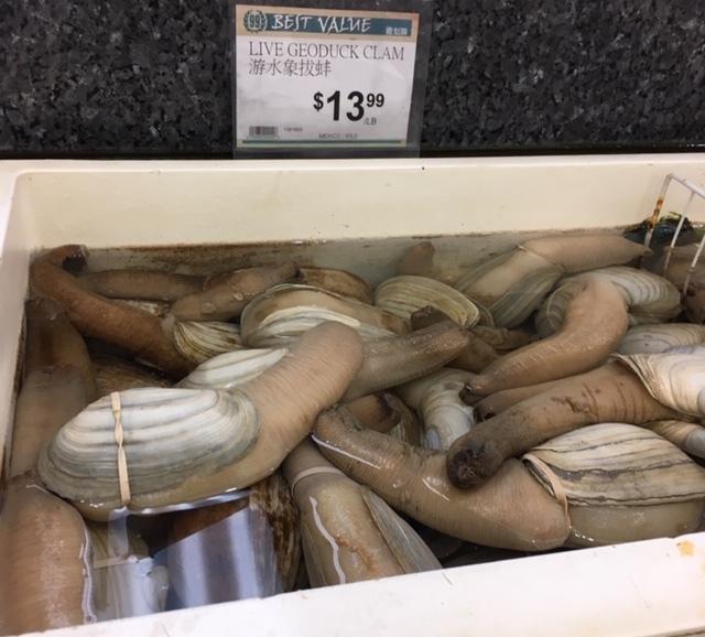 珍しい食材ーミル貝、ドラゴンフルーツなどなど_e0350971_10343453.jpg