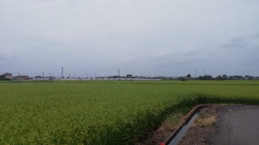 ★コグマ旅 in 栃木県 ★_f0351775_20083705.jpg