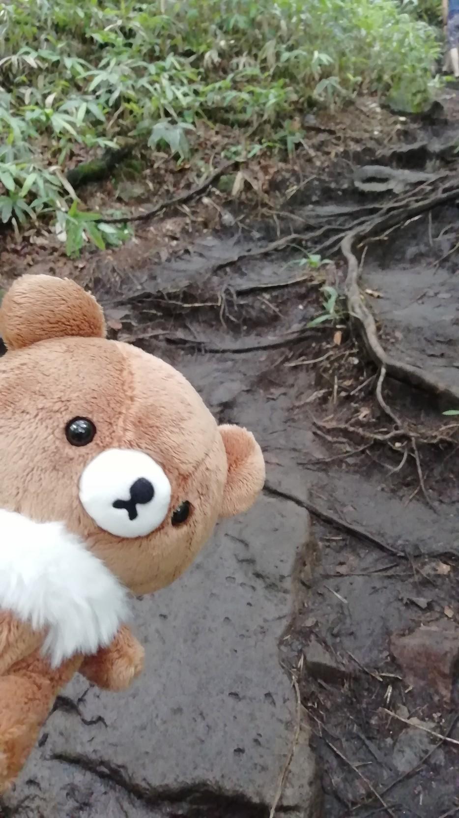 ★コグマ旅 in 栃木県 ★_f0351775_20101369.jpg