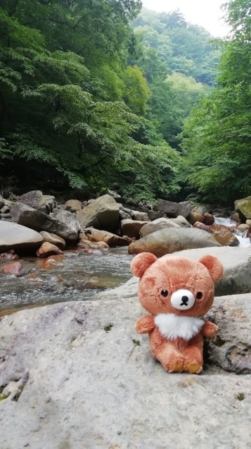 ★コグマ旅 in 栃木県 ★_f0351775_20111101.jpg