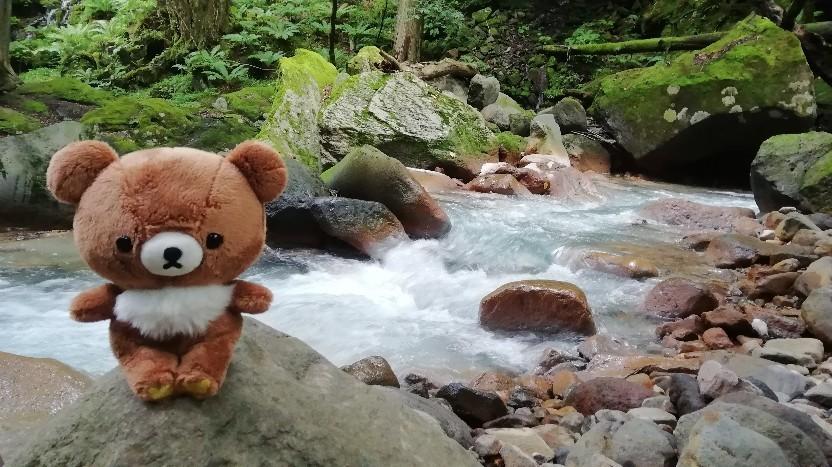 ★コグマ旅 in 栃木県 ★_f0351775_20112838.jpg