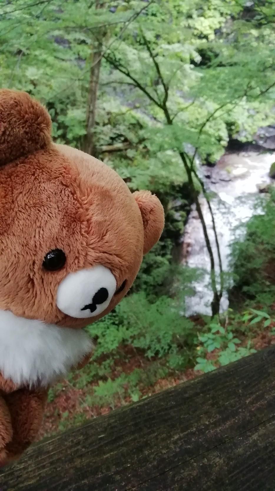 ★コグマ旅 in 栃木県 ★_f0351775_20135659.jpg