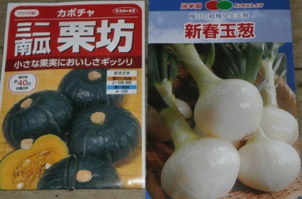 秋採りカボチャと新春玉葱の種蒔き_f0018078_18171722.jpg