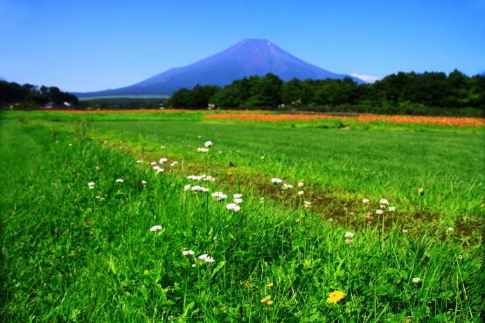 令和元年8月の富士(7)花の都公園の野の花と富士_e0344396_13353221.jpg