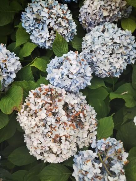 お墓参りの花のアレンジと紫陽花は・・・_f0316507_21055926.jpg