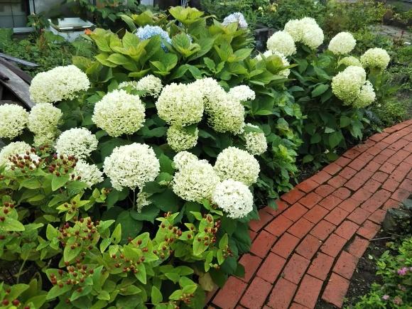 お墓参りの花のアレンジと紫陽花は・・・_f0316507_21075741.jpg