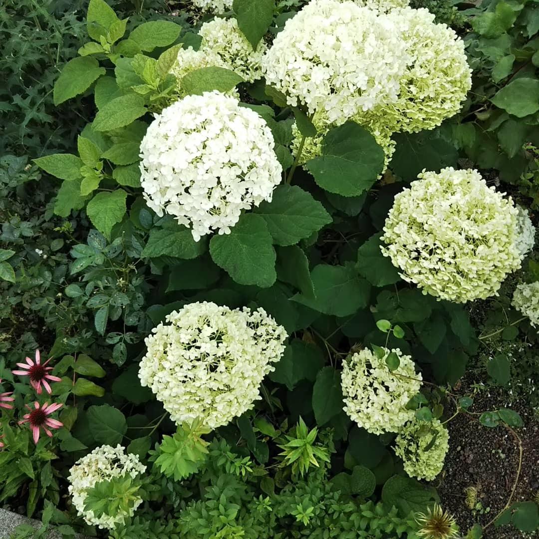 お墓参りの花のアレンジと紫陽花は・・・_f0316507_21084178.jpg