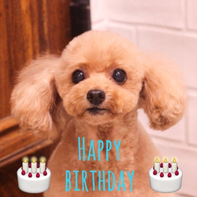 ☆ Happy Birthday ・ パディくん ☆_d0060413_18184394.jpg