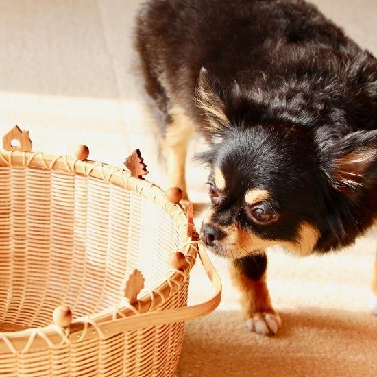 永遠の看板犬_f0197215_21311314.jpeg