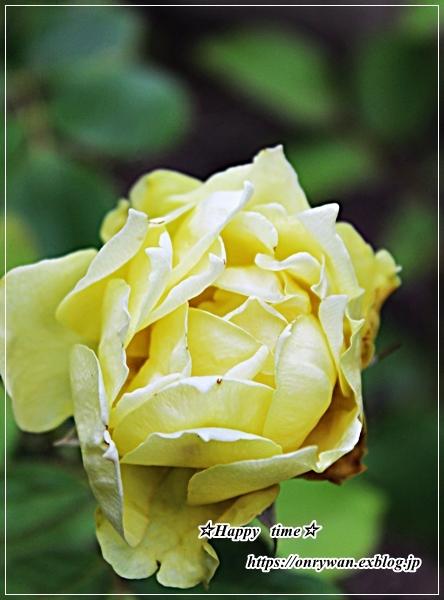 猛暑の中のバラと8月ネイル♪_f0348032_17403765.jpg