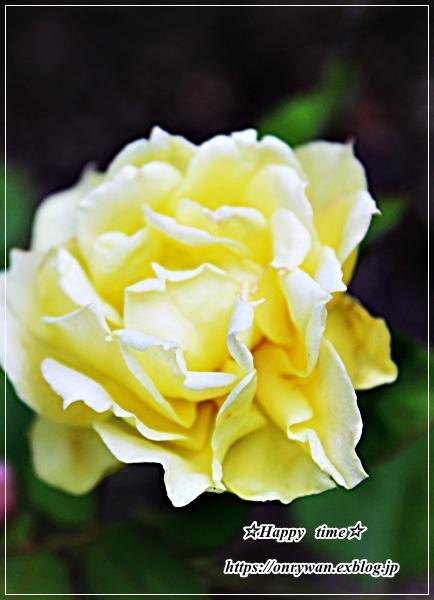 猛暑の中のバラと8月ネイル♪_f0348032_17404607.jpg