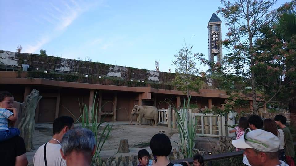 東山動植物園ナイトズー2019 2日目!_f0373339_01152822.jpg