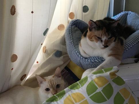 珍しい保護猫さん、ねずみで遊ぶと里親様便り_e0151545_21061247.jpeg