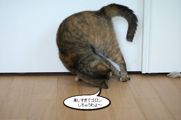 珍しい保護猫さん、ねずみで遊ぶと里親様便り_e0151545_21070285.jpg