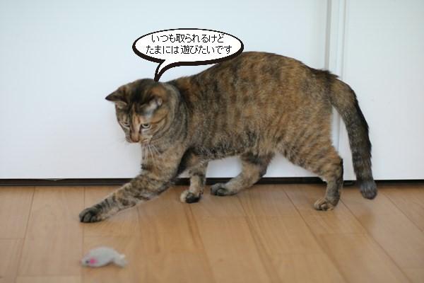 珍しい保護猫さん、ねずみで遊ぶと里親様便り_e0151545_21071423.jpg