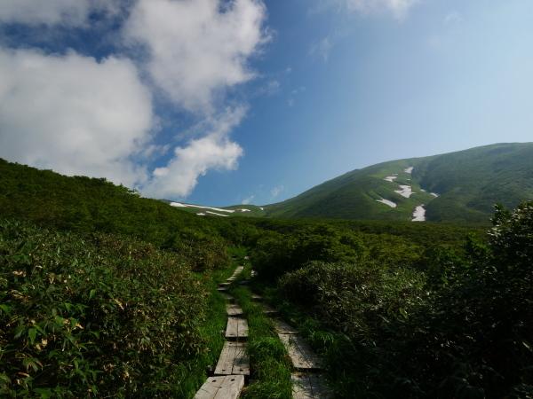 夏の月山 チングルマのお花畑_a0351368_22303477.jpg