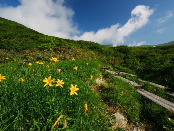 夏の月山 チングルマのお花畑_a0351368_22313333.jpg