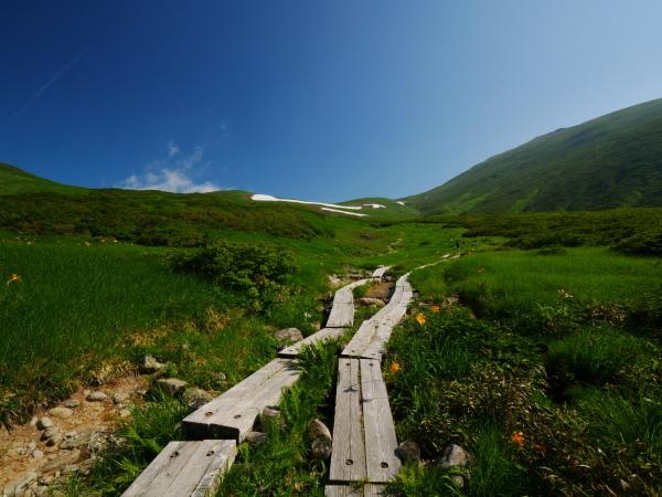 夏の月山 チングルマのお花畑_a0351368_22322993.jpg