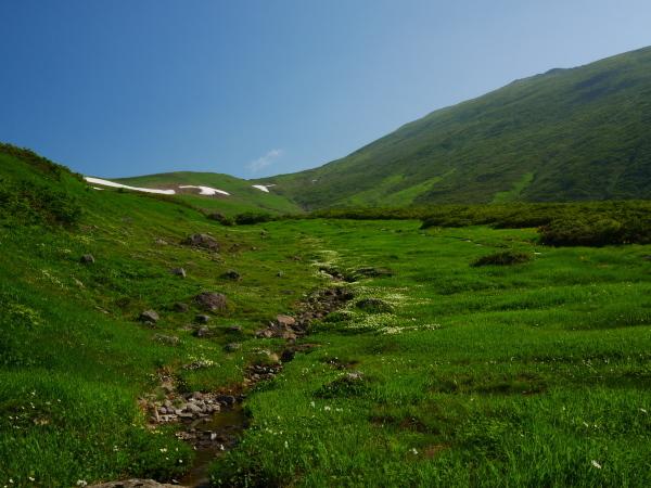 夏の月山 チングルマのお花畑_a0351368_22332339.jpg