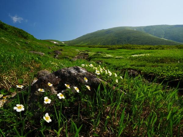 夏の月山 チングルマのお花畑_a0351368_22342006.jpg