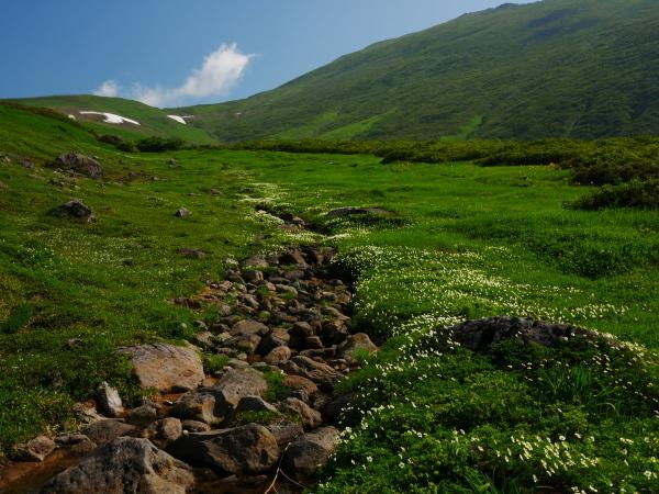 夏の月山 チングルマのお花畑_a0351368_22362909.jpg