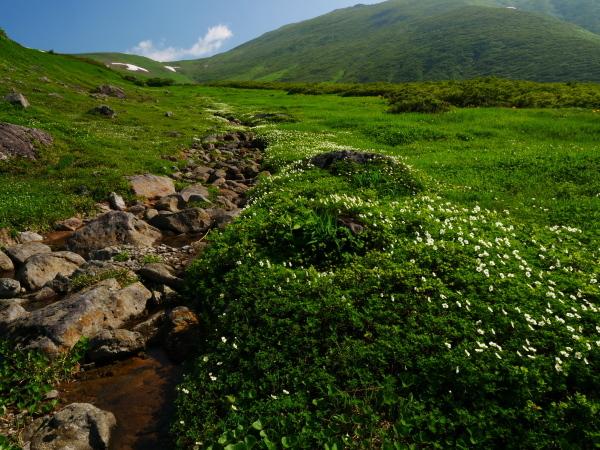 夏の月山 チングルマのお花畑_a0351368_22371858.jpg