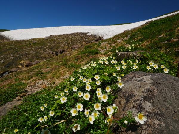 夏の月山 雪渓を越えて_a0351368_23342473.jpg