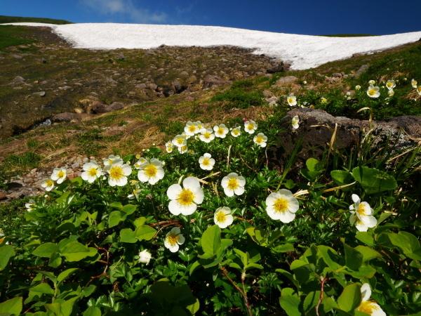 夏の月山 雪渓を越えて_a0351368_23344273.jpg