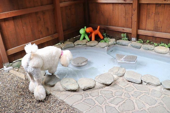 ⑬ホテル凜香富士山中湖でわんこの温泉体験。_b0111376_16332164.jpg