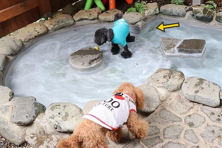 ⑬ホテル凜香富士山中湖でわんこの温泉体験。_b0111376_16450431.jpg