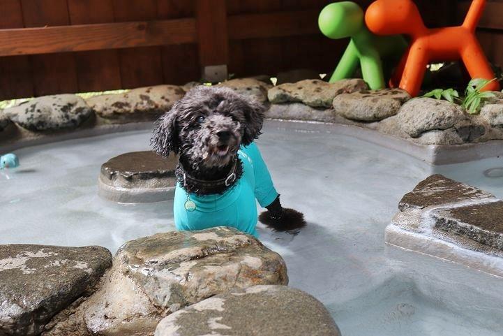 ⑬ホテル凜香富士山中湖でわんこの温泉体験。_b0111376_17341214.jpg