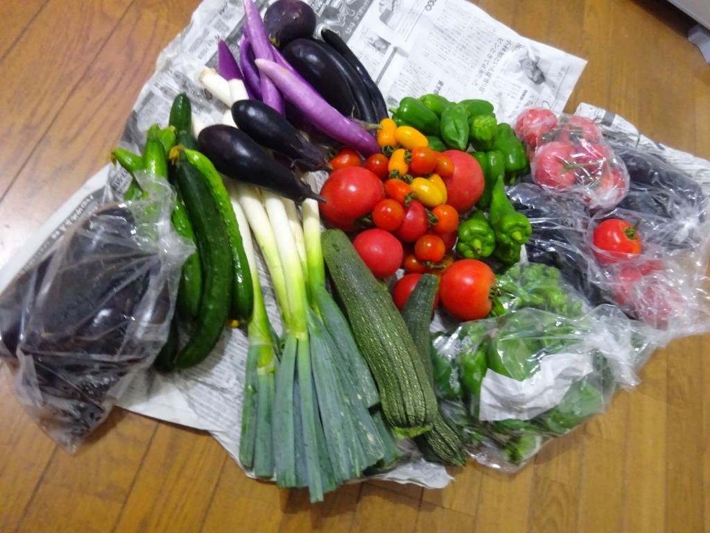 実家からの野菜2019 第二段!帰省時に収穫した分!_d0061678_17104098.jpg