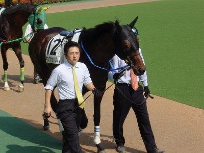 キングマンボ系の大種牡馬&2004年ダービー馬キングカメハメハ逝く_b0015386_23092152.jpg