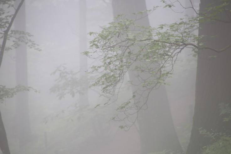 濃霧の中のレンゲショウマ_e0305388_23190682.jpg
