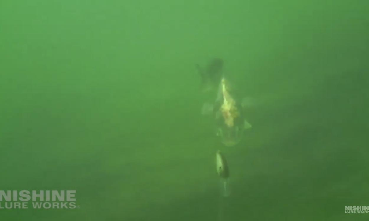 水中動画 【チッパワくんの水中大冒険その3】_d0145899_00284347.jpeg