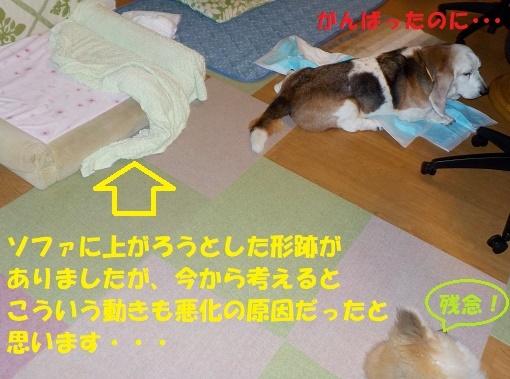 f0121712_14445066.jpg
