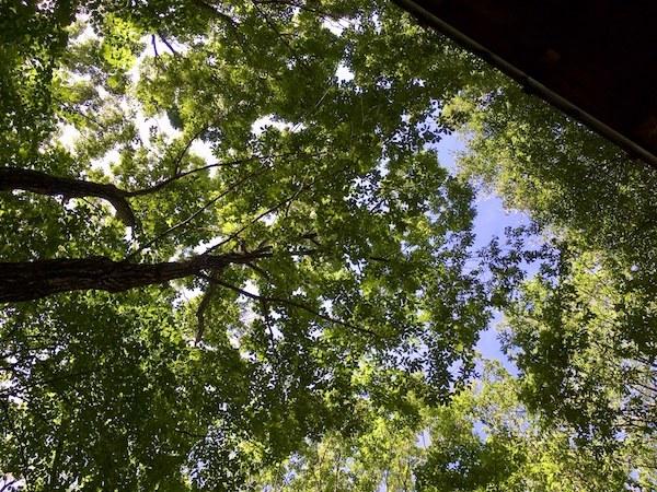 雑木林の中は涼しい_b0038919_12121834.jpg