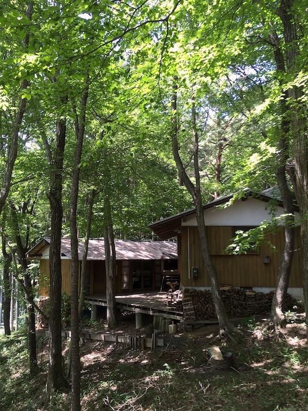 雑木林の中は涼しい_b0038919_12270583.jpg