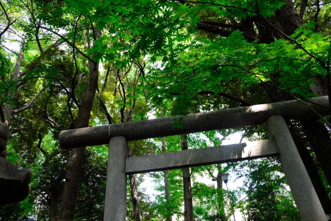 「ときわ台 天祖神社の歌占い」_a0000029_21180822.jpg