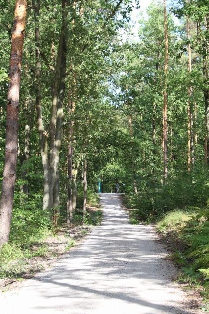 ベルリンGruneの森_a0355629_09123412.jpg