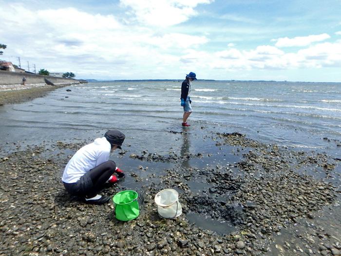 貝掘りリターンズ_c0120834_20503072.jpg