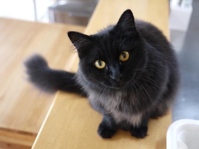 猫のお留守番 マリンちゃん編。_a0143140_22182435.jpg